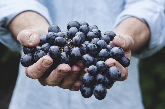 cut grapes into small pieces
